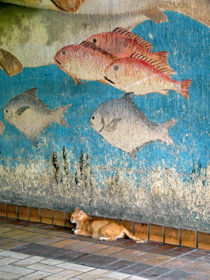 cat-in-fish-souk.JPG