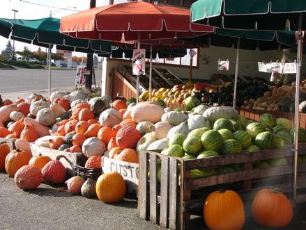varieties-of-pumpkins.JPG