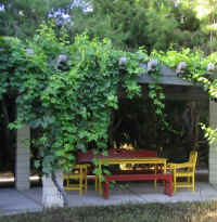 grape_vine_on_arbor_smalljpg.jpg
