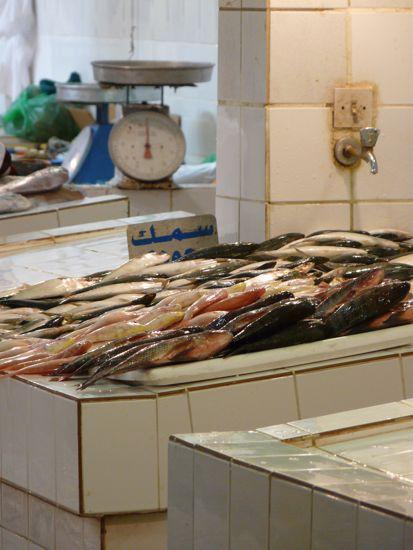 00mubfish