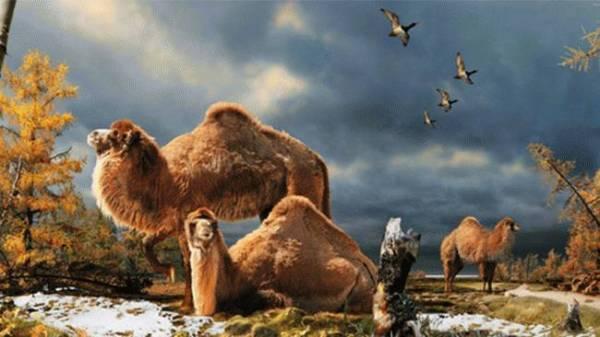 arctic-camel_650x366