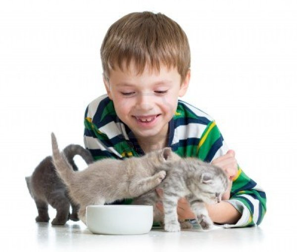 17499575-funny-child-boy-feeding-cats-kittens
