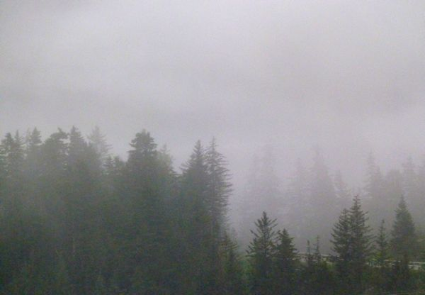 00WhittierFogTreeline