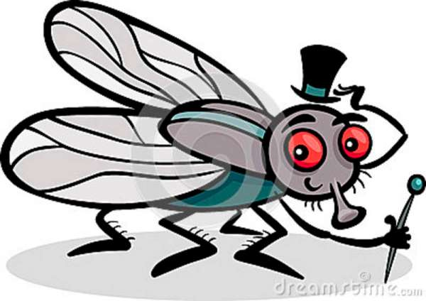 housefly-insect-cartoon-illustration-29212578