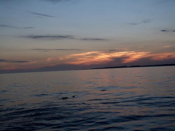 SunsetDolphins