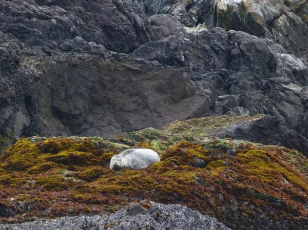 SealPup