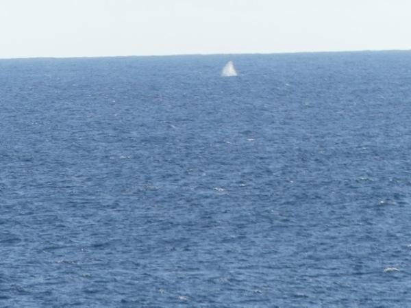 WhaleBlows