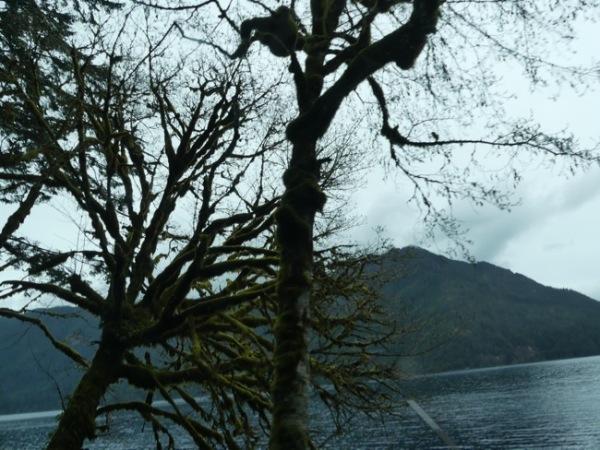 LakeCrescentMossyTrees