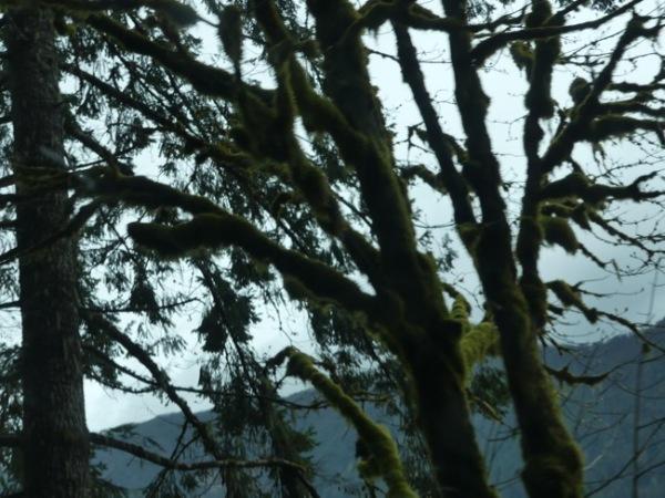 LakeMossyTrees2