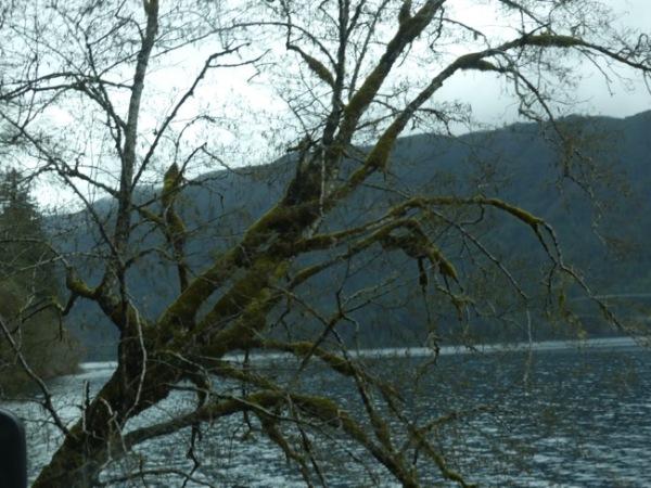LakeMossyTrees3
